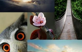 collage fonditos - appandabout